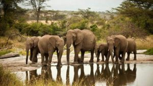 2 Days Safari Tsavo East National Park