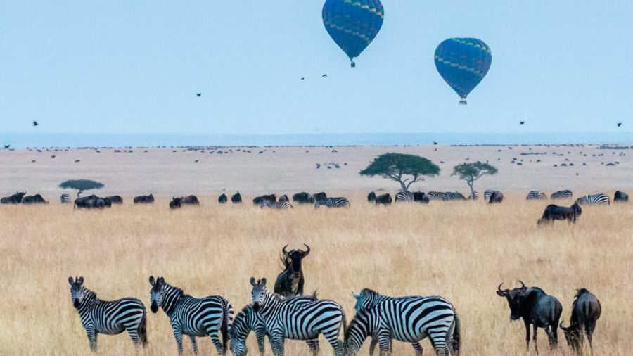 6 DAYS 5 NIGHTS-AMBOSELI, MAASAI MARA