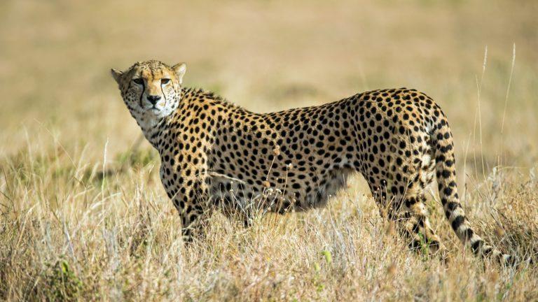 Safari 5gg Amboseli Taita Hills Tsavo Est