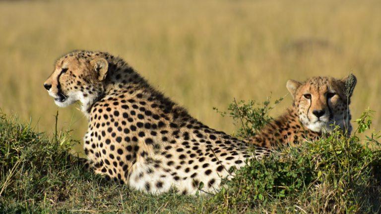 Safari 3gg Masai Mara 1