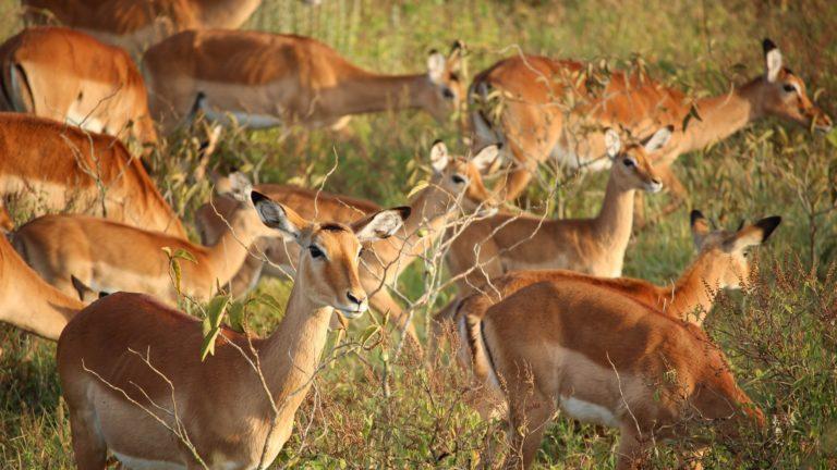 Safari 3gg Masai Mara 4