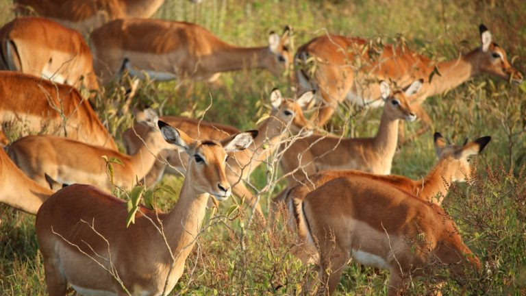Safari 3 Tage Masai Mara 6