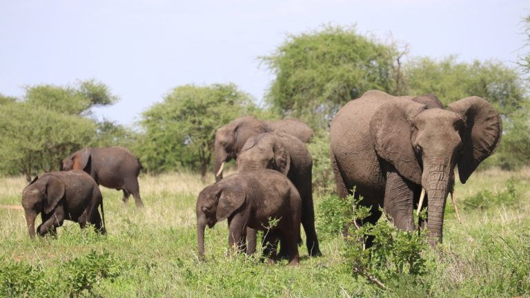 Safari 3gg Masai Mara 2