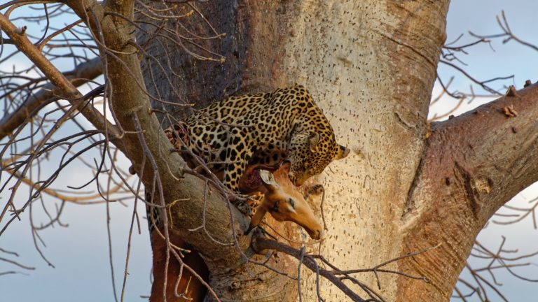 Safari 3gg Masai Mara 7