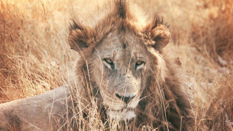 Safari 3gg Masai Safari 3 Days