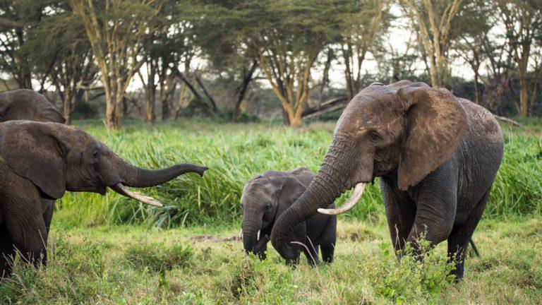 Safari 3gg Masai Mara 3