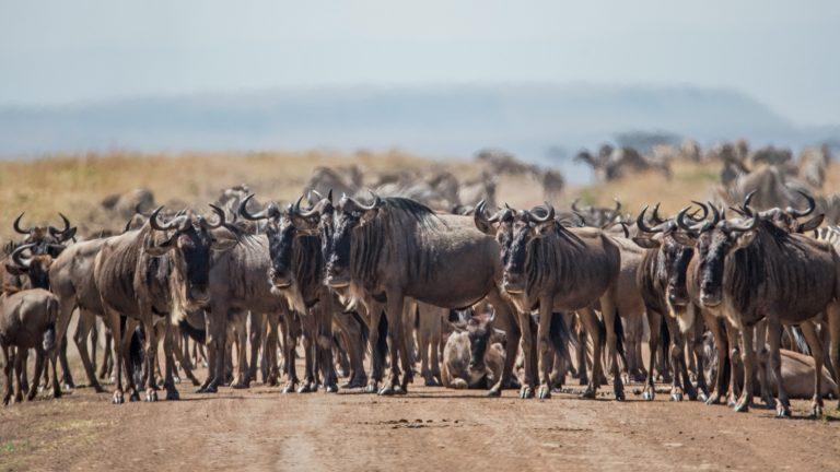 Safari 3 Tage Masai Mara 5