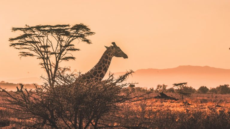 Safari 1 Day Tsavo East 4 Days Amboseli Tsavo West Tsavo East 4 Days Safari From Nairobi Safari 4 Tage