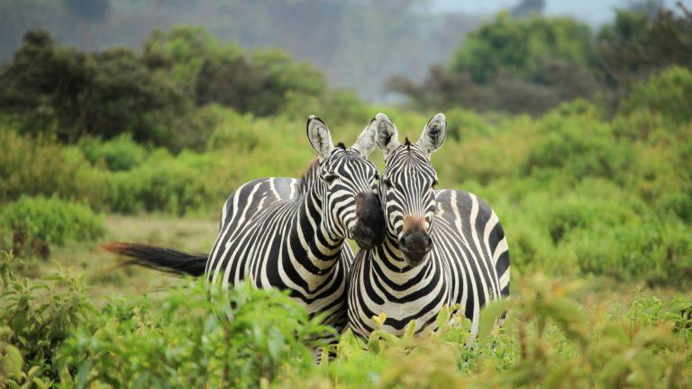 Safari 6gg Masai Mara Nairobi Lake Nakuru