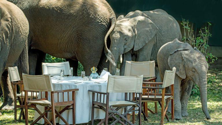 Elephant herd - Giraffe Manor