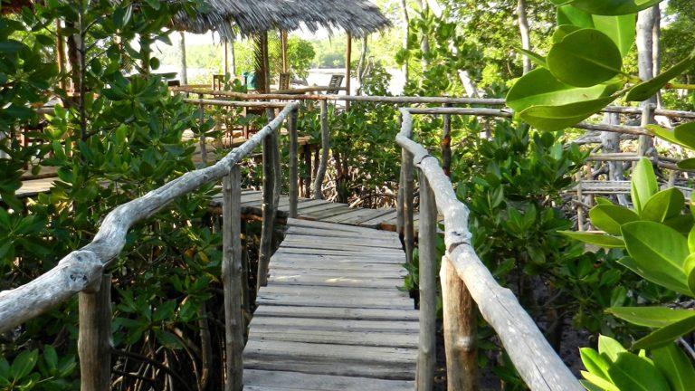 Mida Creek Boardwalk 1