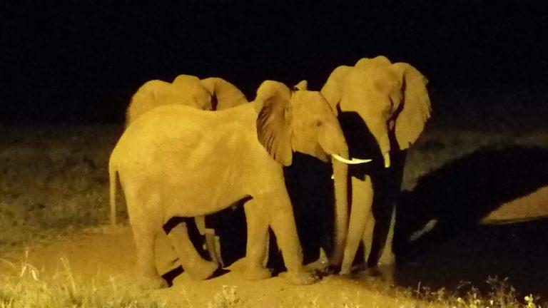 Safari 2gg Tsavo Est