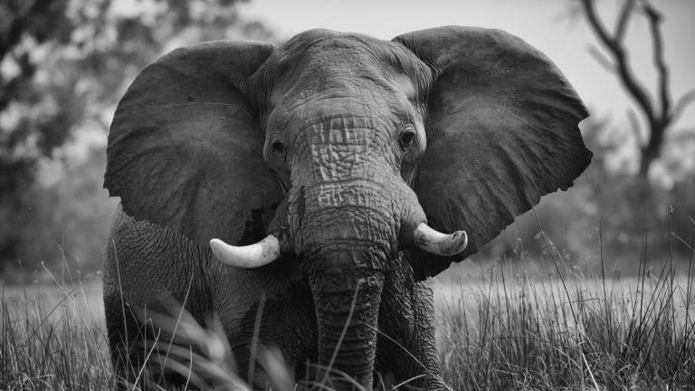 Safari 2gg Masai Mara