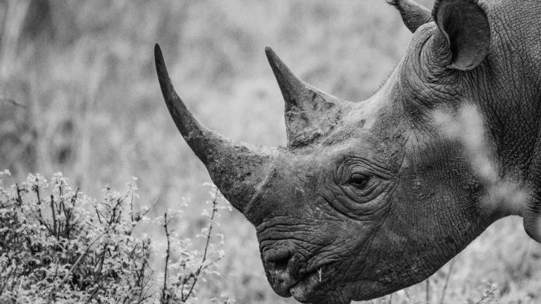 Safaris And Excursions Kenya 2020 Escursioni In Kenya 2020 Safaris And Excursions Kenya 2020 King Lion Tours And Safaris Safari Ed Escursioni In Kenya Safaris And Excursions Kenya 2020 Safari 3 Days Masai Mara