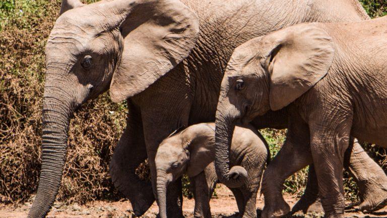 Safari Ed Escursioni In Kenya
