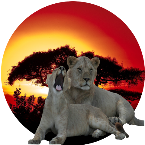 King Lion Tours And Safaris Logo