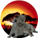King-Lion-Tours-And-Safaris