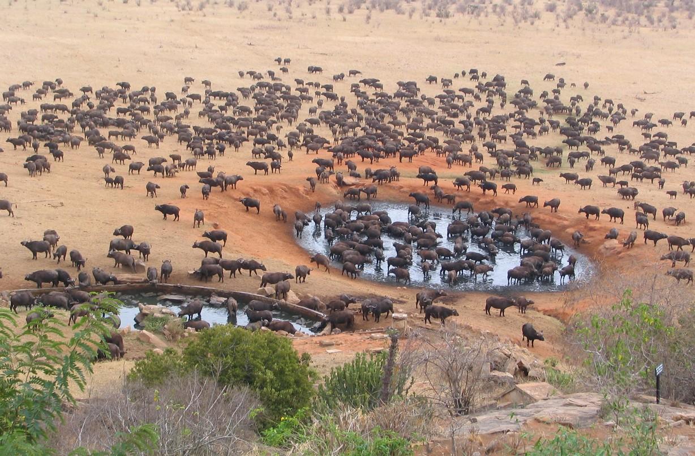 king lion tours and safaris